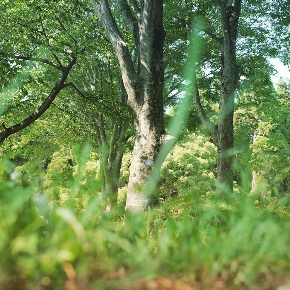 千葉市昭和の森の風景